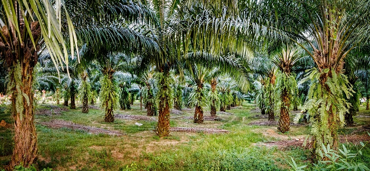 Waitrose looks beyond deforestation-free to 'forest favorable' palm oil supply